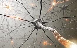 Neurônio e dendritos