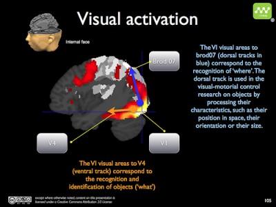 """Processamento visual- 2 vias-""""o quê""""-detalhes dos elementos visuais que nos fazem reconhecer o objeto; önde""""-localização e orientação espacial do objeto."""