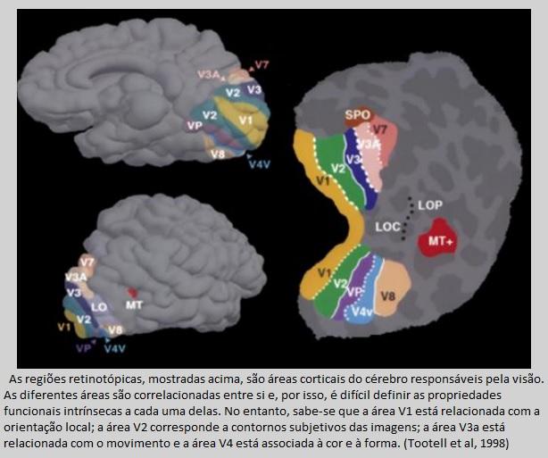área retinotópica