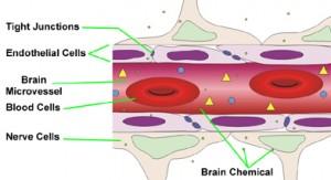 Esquema da barreira hematoencefálica.