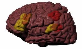 Localização dos neurônios-espelho