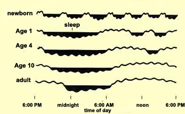 Newborns sleep an average of 16 hours per day, but even at this age, some babies sleep a lot more (20 hours) while others sleep a lot less (12). Newborns' sleep is not affected by the alternation of day and night. Instead, it is broken up into periods of 3 or 4 hours, and the main thing that wakes newborns up is the need to nurse. Infants spend about half of their sleeping lives in REM sleep–double the proportion for adults.This large amount of REM sleep in infants is believed to assist the development of their central nervous systems. Scientists know that neural activity helps developing synapses to find their targets. This neural activity is very intense during REM sleep, so the frequent episodes of REM sleep in babies may facilitate the activation of neural pathways and the establishment of the appropriate synaptic connections between them. http://thebrain.mcgill.ca/flash/a/a_11/a_11_p/a_11_p_cyc/a_11_p_cyc.html