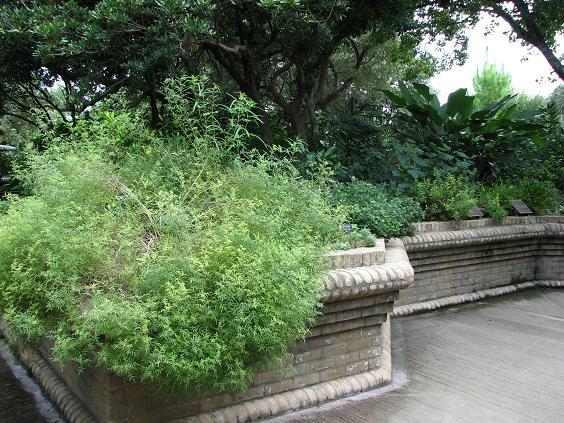 Jardim sensorial: o nível elevado das plantas permite que sejam tocadas e percebidas em sua textura e em seu perfume.