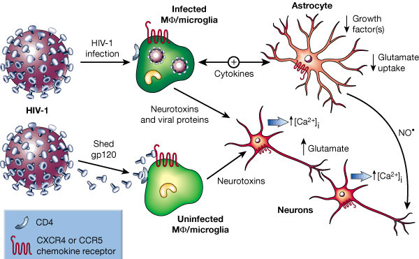 hiv brain