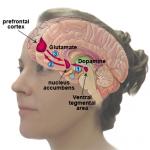 cocaine neurocircuitry-of-addiction