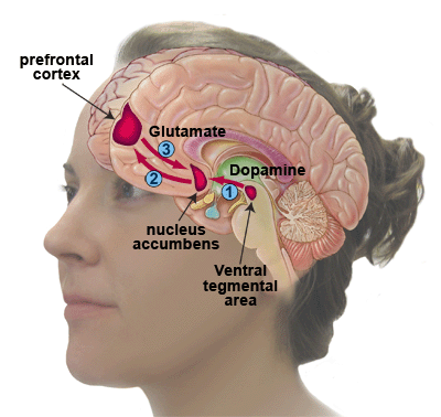 cocaine neurocircuitry-of-addiction