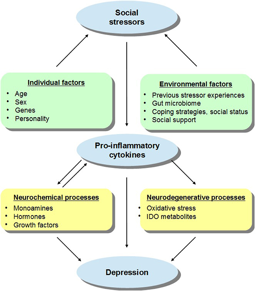 Figure 1. A schematic representation of the relations between social stressors, pro-inflammatory cytokines, and depressive states, with a particular focus on the individual and environmental factors that may moderate these effects. It is suggested that in addition to sex and age, the capacity of social stressors to promote inflammatory variations that might lead to depression may be influenced by the presence of genetic and personality factors. For instance, individuals carrying specific gene combinations or polymorphisms (e.g., variants of IL-6, IL-1β, TNF-α) may be more vulnerable to the depressive effects of inflammatory activation provided that they also encounter social stressors. In addition, it is proposed that environmental factors may also impact on stress-related cytokine responses and thus on depressive symptoms. For example, previous stressor experiences in the form of prenatal or early-life adversity or immunological challenges as well as gut bacterial disturbances may influence inflammatory processes and sensitize immune responses to subsequent stressors, thus favoring the emergence of depressive symptoms. However, in the context of adequate coping strategies, higher social status, or in the presence of effective social support, the cytokine effects of stressors may be limited thus buffering against mood disturbances. The activation of pro-inflammatory processes may directly or indirectly influence depressive states. Elevations of cytokines may influence monoamine (e.g., 5-HT, NE), hormone (e.g., CRH), and growth factor (e.g., BDNF) activity which might favor the evolution of depression (and basal hormonal and neurochemical functioning may impact cytokine processes). Alternatively, cytokine variations may stimulate the enzyme indoleamine 2,3-dioxygenase (IDO) and promote the release of neurotoxic metabolites, including kynurenic acid, quinolinic acid, or 3-hydroxykynurenine, and cause oxidative stress, culminating in depression. Download Article Export citation 2,896 TOTAL VIEWS Article has an altmetric score of 7 View Article Impact Like 1 Comment 0 Share 1 SHARE ON 0 3 0 0 3 REVIEW ARTICLE Front. Neurosci., 16 December 2014 | http://dx.doi.org/10.3389/fnins.2014.00416 Cytokine variations and mood disorders: influence of social stressors and social support http://www.frontiersin.org/files/Articles/119363/fnins-08-00416-HTML/image_m/fnins-08-00416-g001.jpg