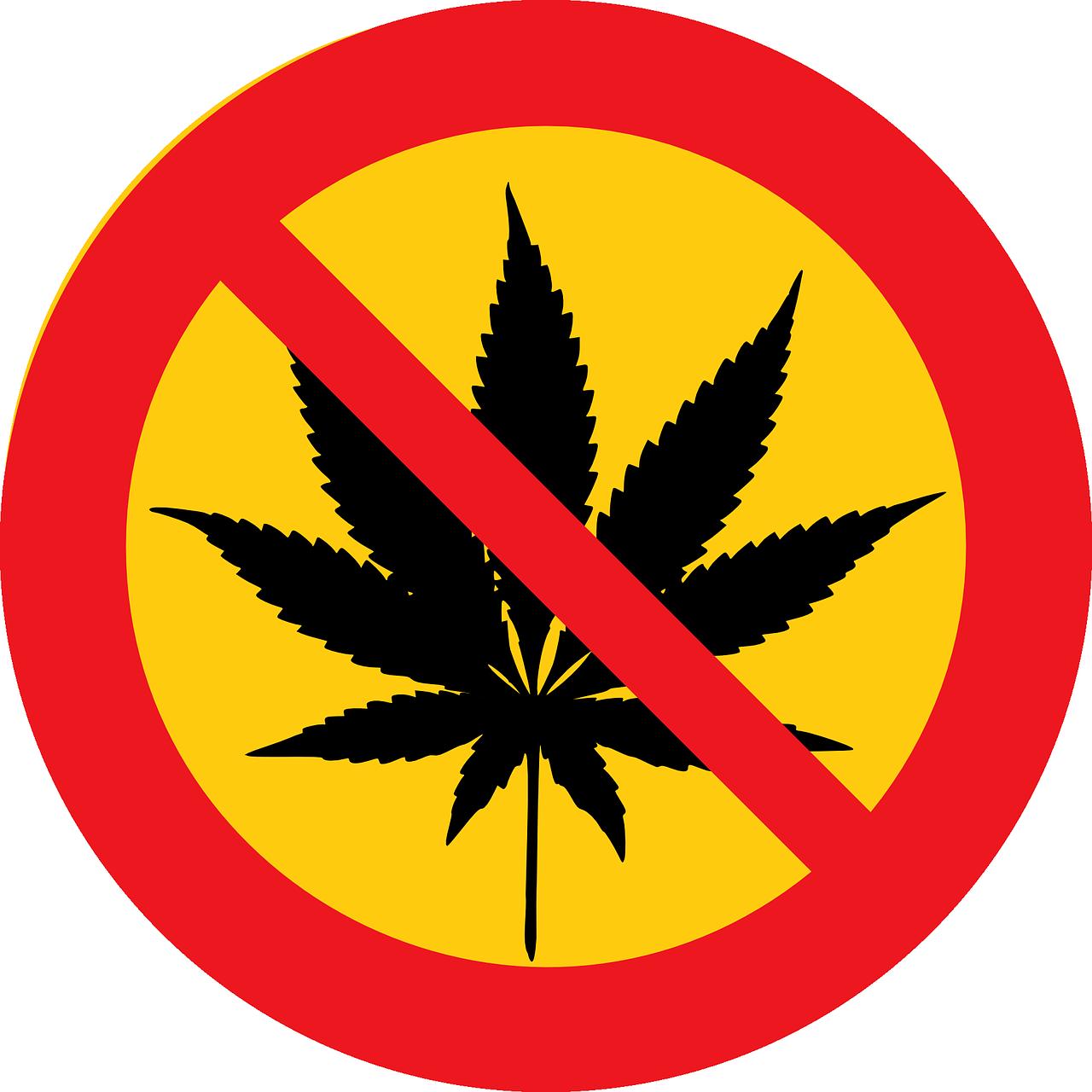 Cannabis causa rompimento de circuitos neurais
