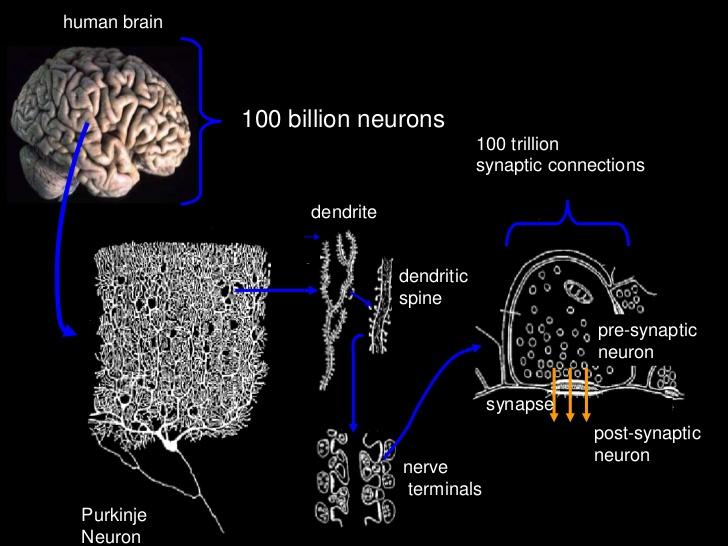 neuro1