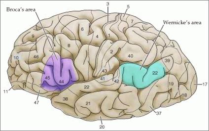 áreas responsáveis pelo processamento da linguagem