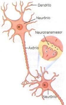 sinapse1