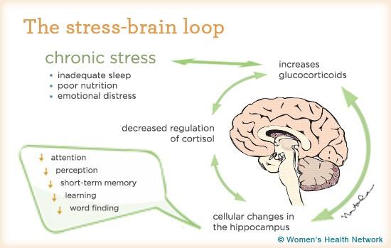 -memory-loss-severe-stress-