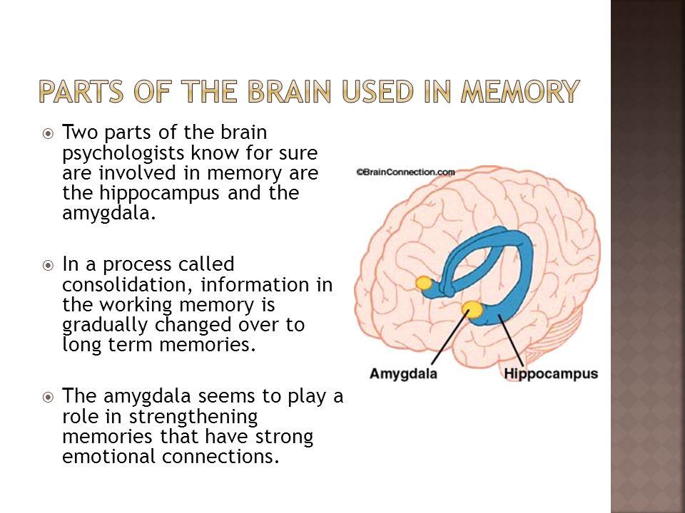 memory2