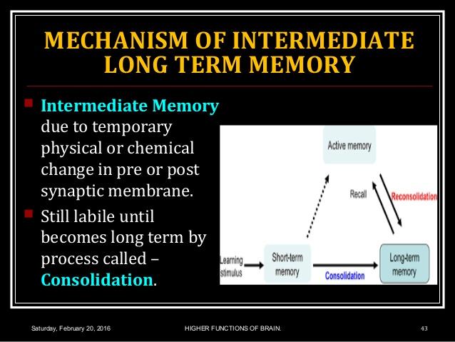 memory3