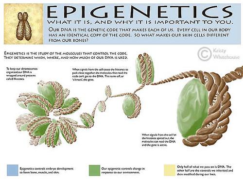 epigenetics (1)