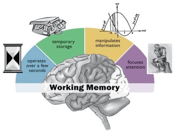 working-memory-3