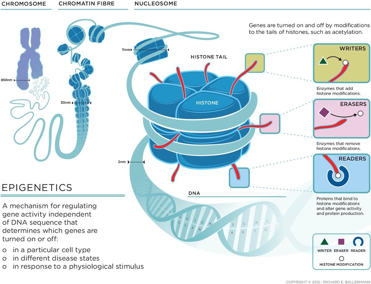 Trauma na infância e epigenética