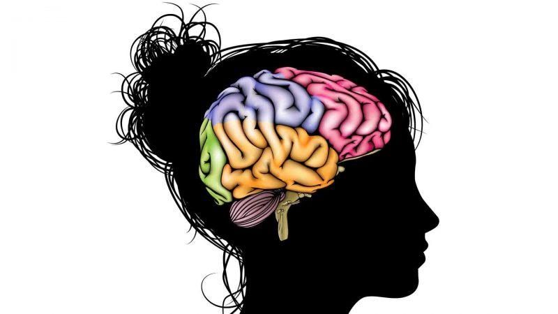 O que é sistema nervoso?
