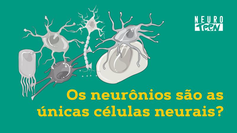 Os neurônios são as únicas células neurais?